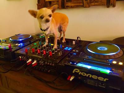 DJ saint tropez MARIAGE var